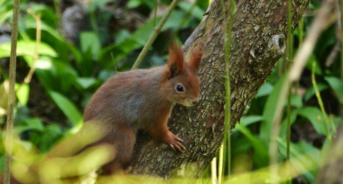 Prebúdzajúca sa príroda v petržalskom Lužnom lese